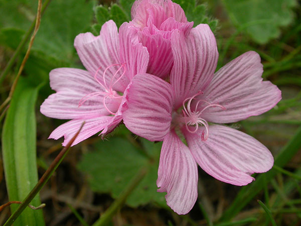 Checkerbloom image